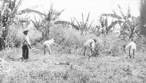 Imagen de Limpiando el terreno (propio)