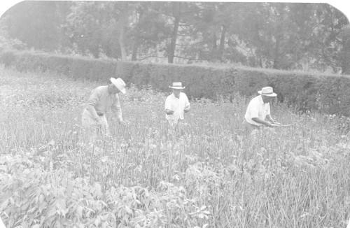 Imagen de Revisando el cultivo (propio)