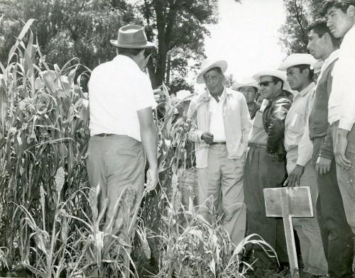 Imagen de Revisando el cultivo del maíz (propio)