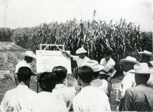 Imagen de Capacitando a los campesinos en el cultivo del maíz (propio)