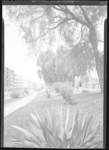 Imagen de Camellones en Av. Melchor Ocampo
