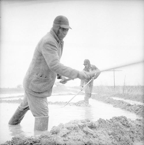 Imagen de Bracero acondicionando canales de riego (atribuido)